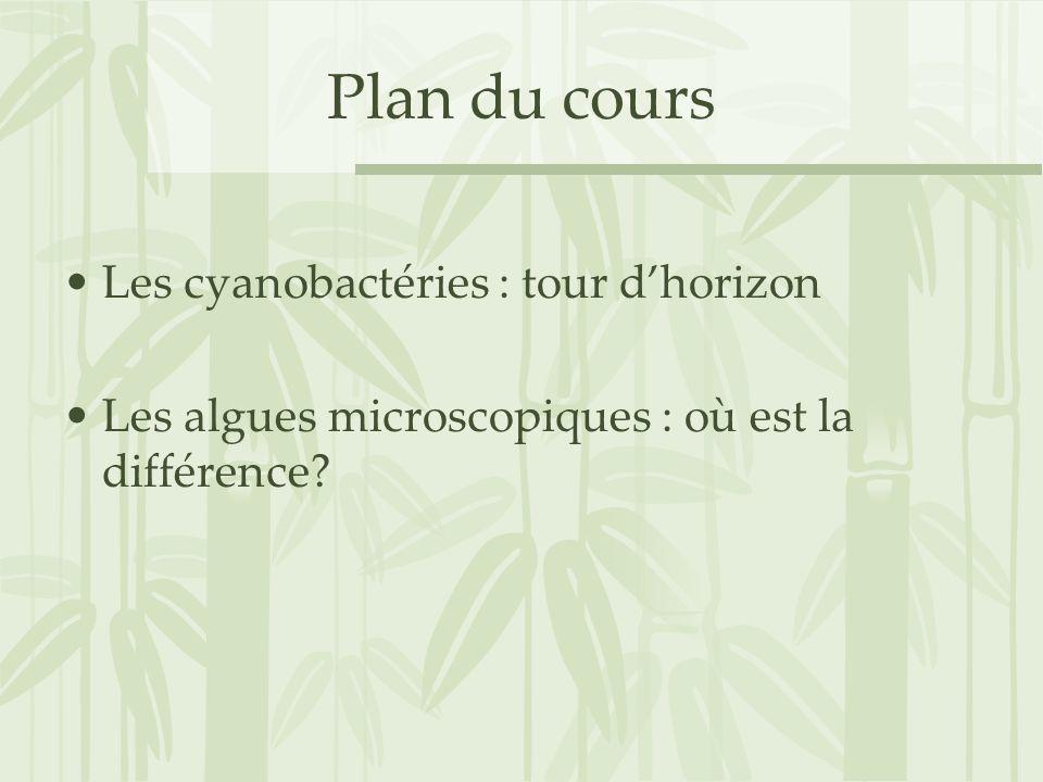 Plan du cours Les cyanobactéries : tour d'horizon