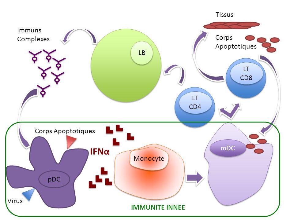 IFNα Tissus Immuns Complexes Corps Apoptotiques LB LT CD8 LT CD4