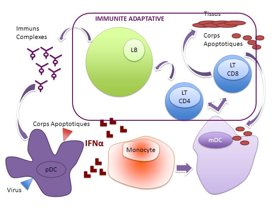 IFNα Tissus IMMUNITE ADAPTATIVE Immuns Complexes Corps Apoptotiques LB