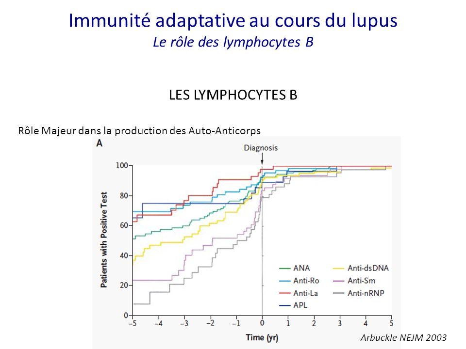 Immunité adaptative au cours du lupus