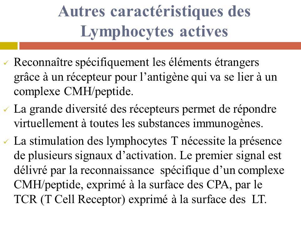 Autres caractéristiques des Lymphocytes actives