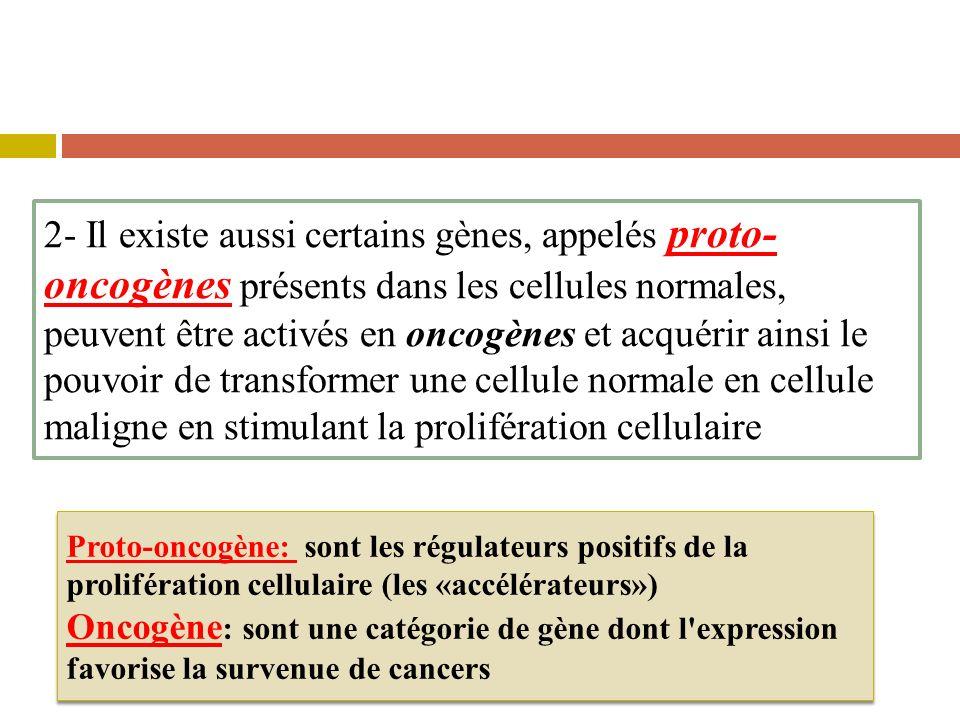 2- Il existe aussi certains gènes, appelés proto- oncogènes présents dans les cellules normales, peuvent être activés en oncogènes et acquérir ainsi le pouvoir de transformer une cellule normale en cellule maligne en stimulant la prolifération cellulaire