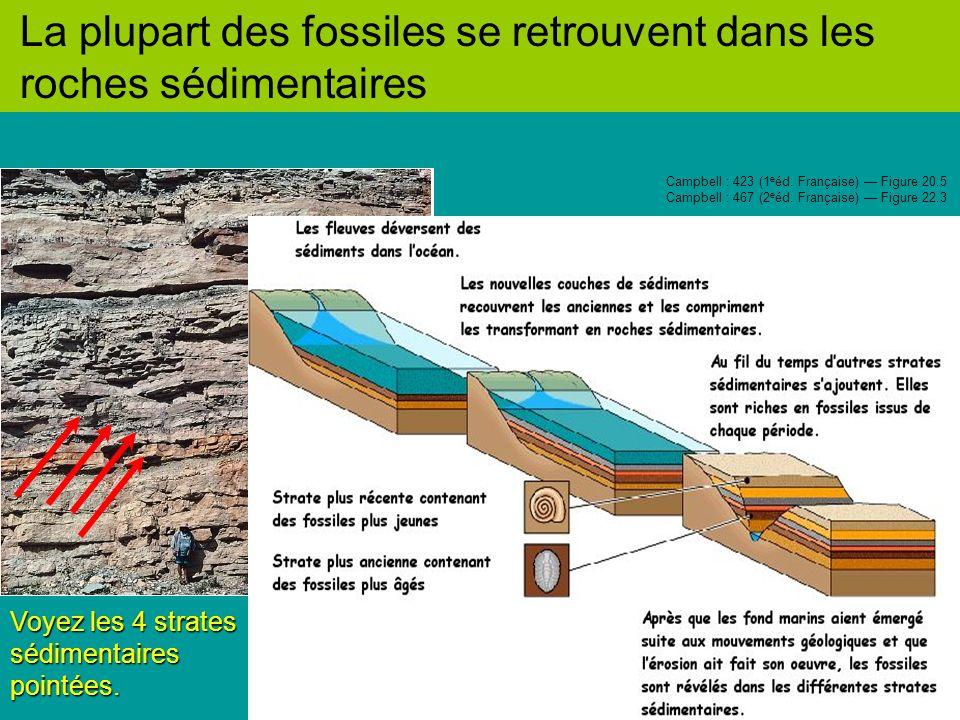 La plupart des fossiles se retrouvent dans les roches sédimentaires