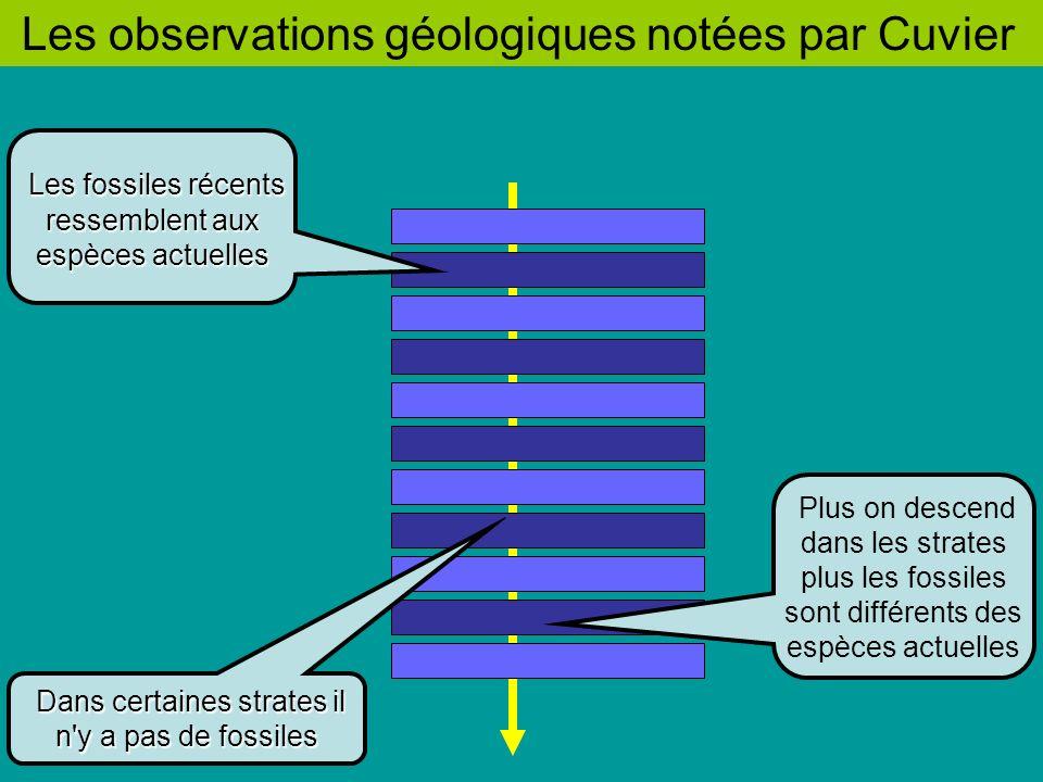 Les observations géologiques notées par Cuvier