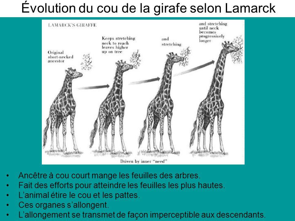 Évolution du cou de la girafe selon Lamarck
