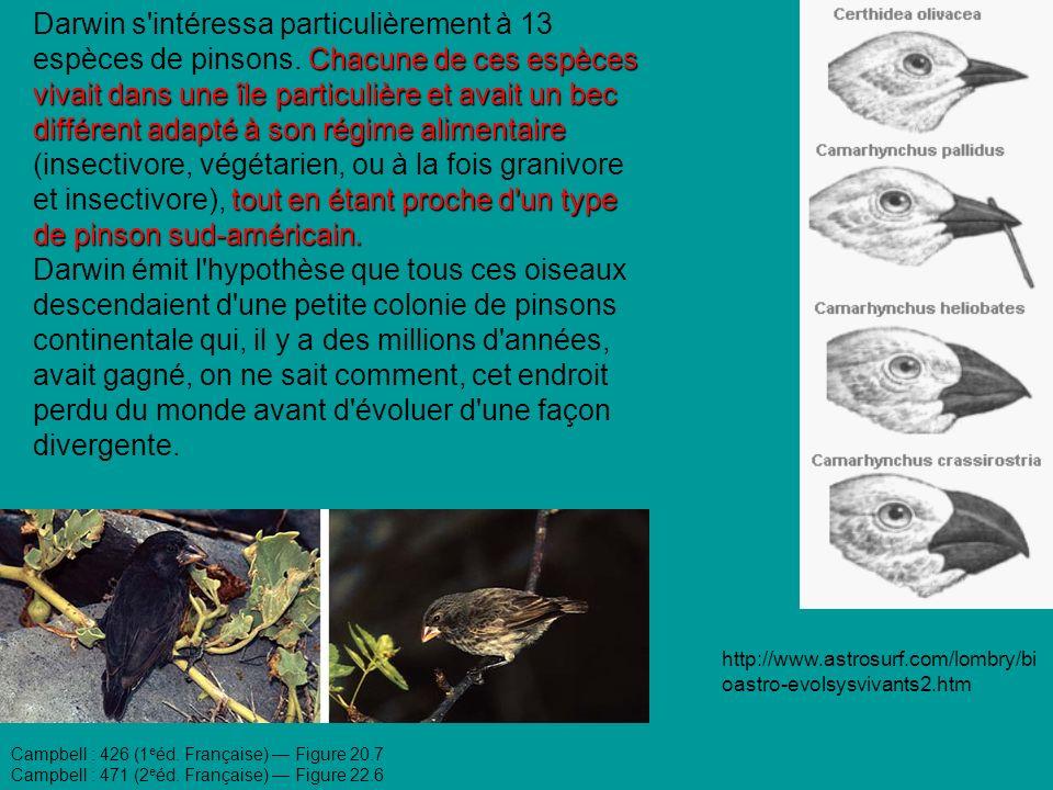 Darwin s intéressa particulièrement à 13 espèces de pinsons