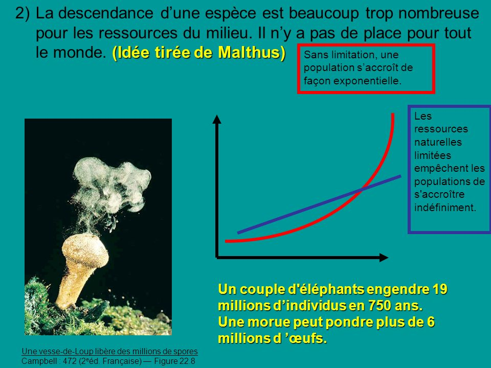2) La descendance d'une espèce est beaucoup trop nombreuse pour les ressources du milieu. Il n'y a pas de place pour tout le monde. (Idée tirée de Malthus)