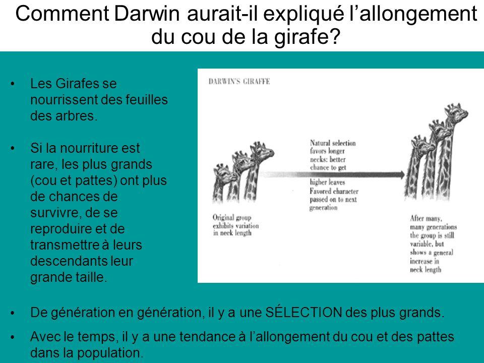 Comment Darwin aurait-il expliqué l'allongement du cou de la girafe