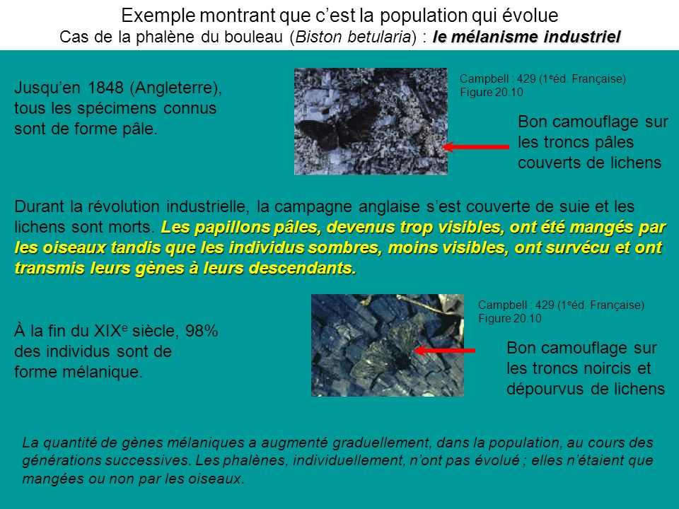 Exemple montrant que c'est la population qui évolue Cas de la phalène du bouleau (Biston betularia) : le mélanisme industriel