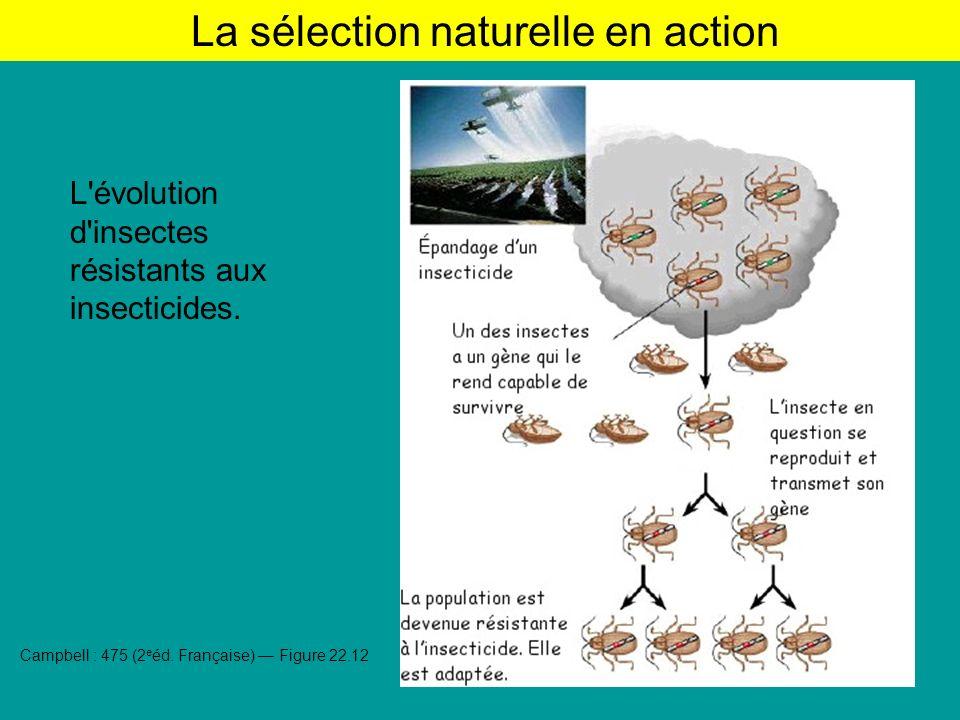 La sélection naturelle en action