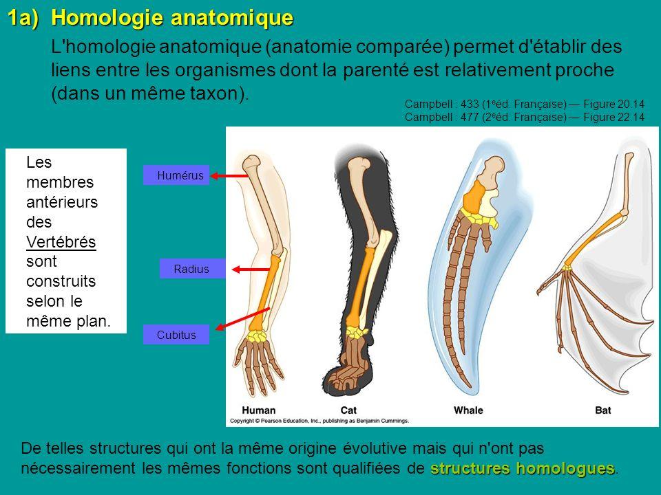 1a) Homologie anatomique