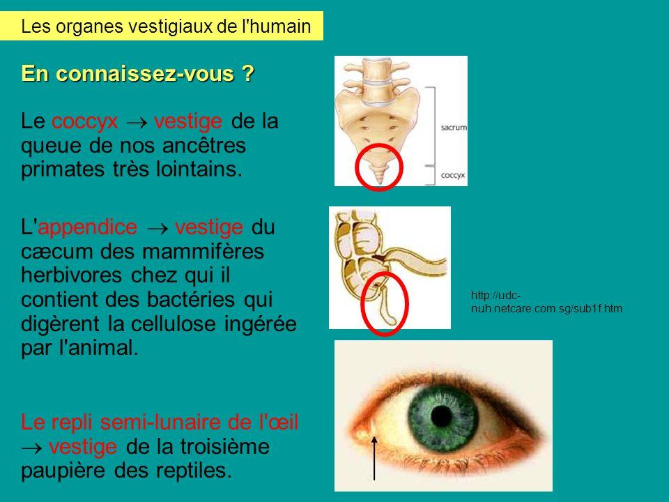Les organes vestigiaux de l humain
