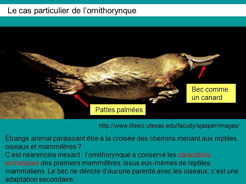 Le cas particulier de l'ornithorynque