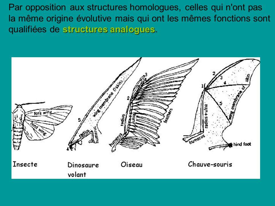 Par opposition aux structures homologues, celles qui n ont pas la même origine évolutive mais qui ont les mêmes fonctions sont qualifiées de structures analogues.