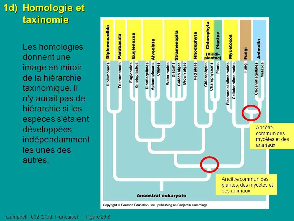 1d) Homologie et taxinomie