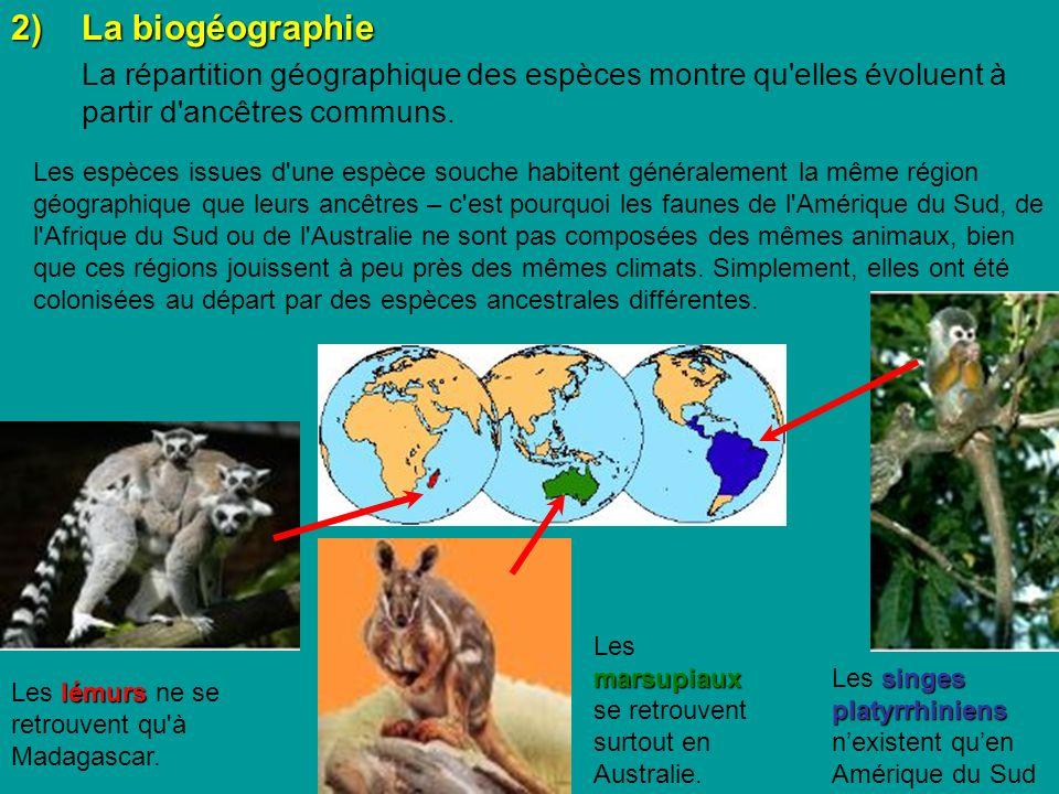 2) La biogéographie La répartition géographique des espèces montre qu elles évoluent à partir d ancêtres communs.