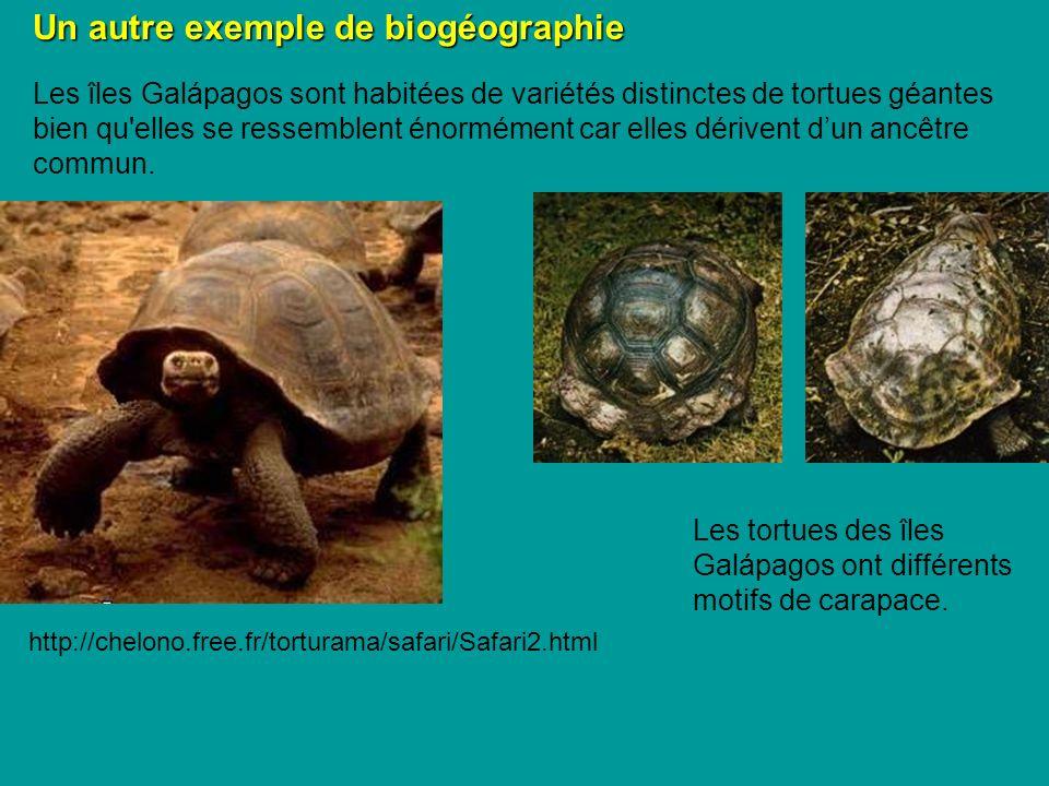 Un autre exemple de biogéographie