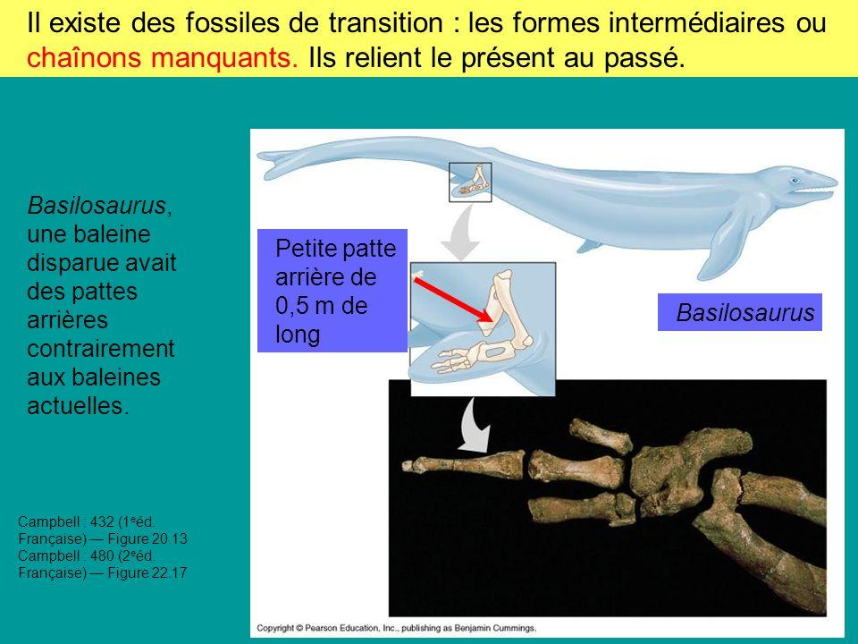 Il existe des fossiles de transition : les formes intermédiaires ou chaînons manquants. Ils relient le présent au passé.