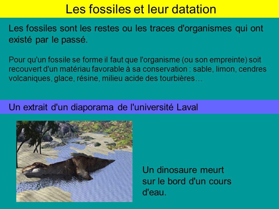 Les fossiles et leur datation