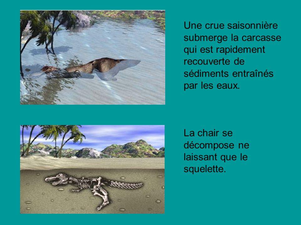 Une crue saisonnière submerge la carcasse qui est rapidement recouverte de sédiments entraînés par les eaux.