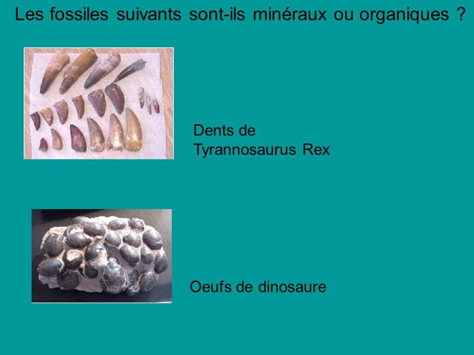 Les fossiles suivants sont-ils minéraux ou organiques