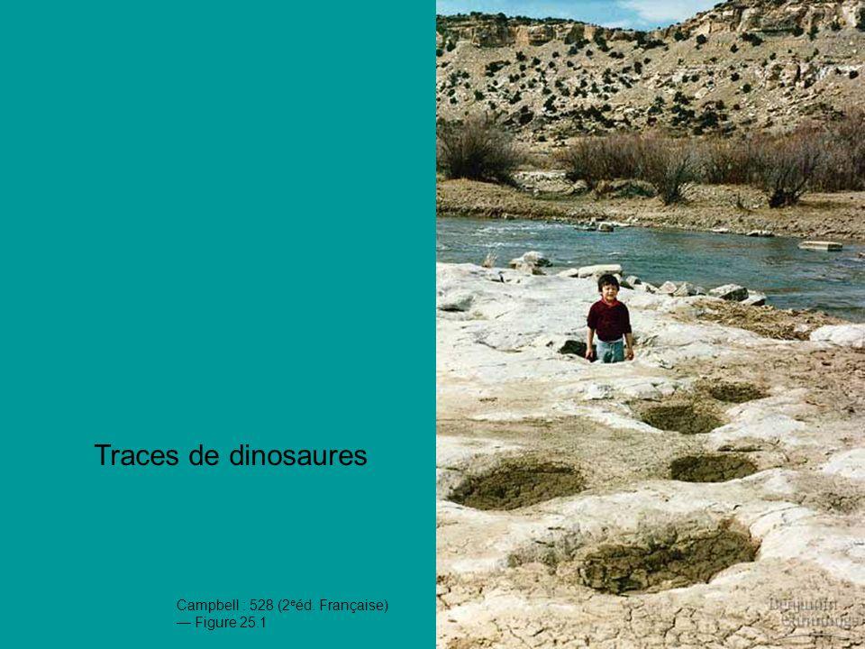 Traces de dinosaures Tes numéros facilitent la lecture du diaporama