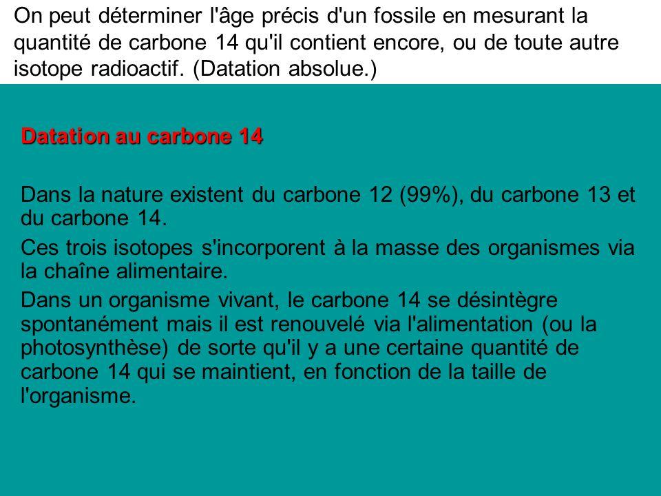 On peut déterminer l âge précis d un fossile en mesurant la quantité de carbone 14 qu il contient encore, ou de toute autre isotope radioactif. (Datation absolue.)