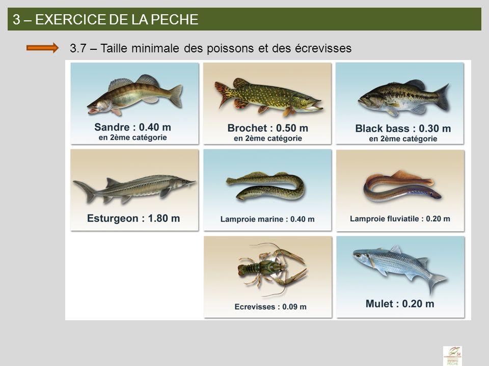 3 – EXERCICE DE LA PECHE 3.7 – Taille minimale des poissons et des écrevisses
