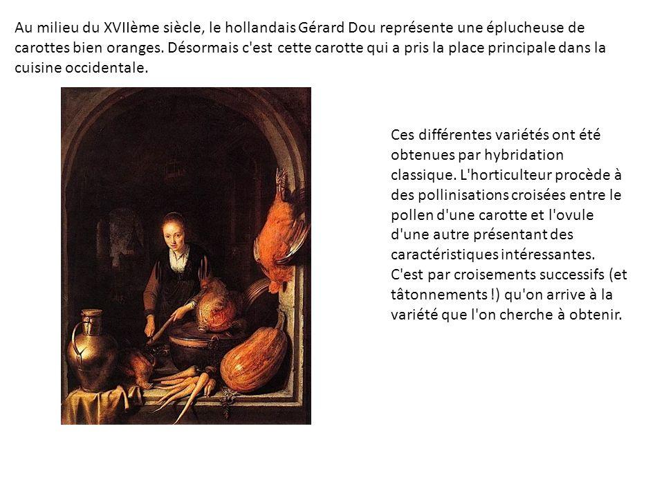 Au milieu du XVIIème siècle, le hollandais Gérard Dou représente une éplucheuse de carottes bien oranges. Désormais c est cette carotte qui a pris la place principale dans la cuisine occidentale.