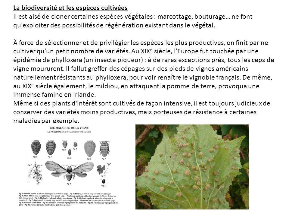 La biodiversité et les espèces cultivées