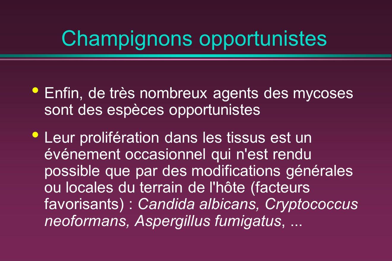 Champignons opportunistes