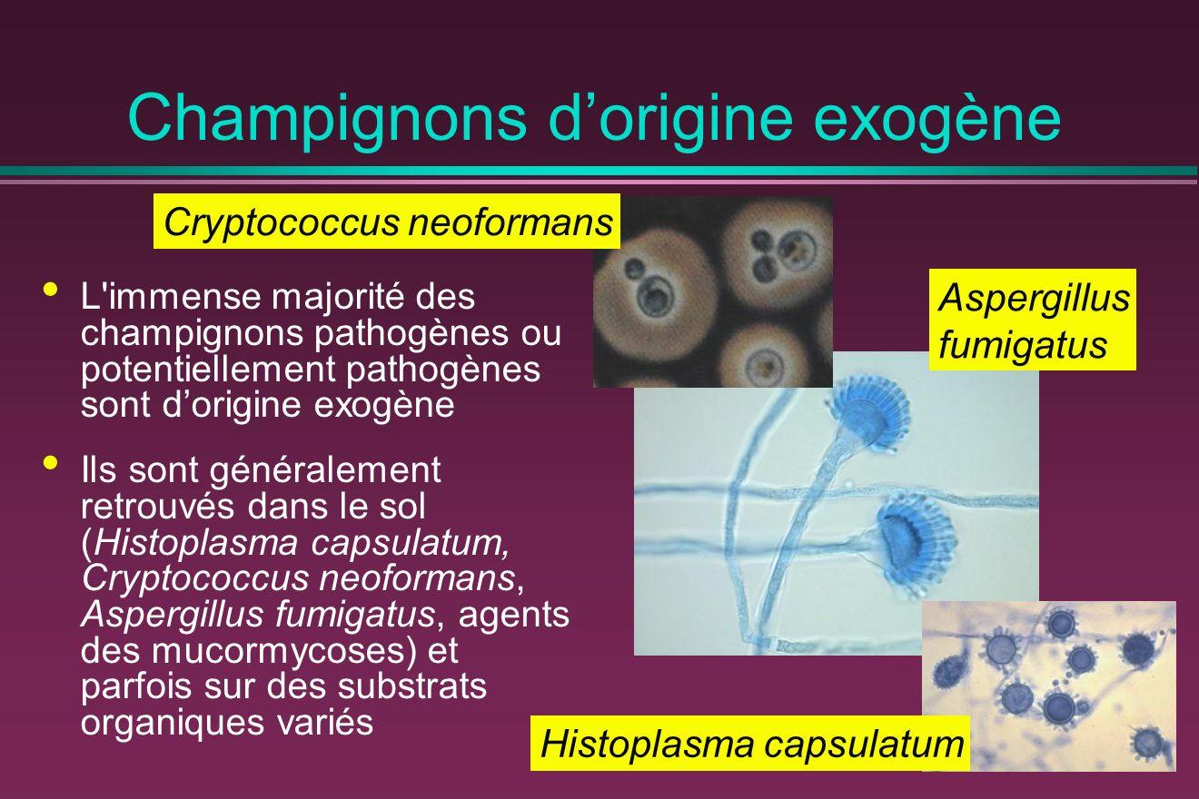 Champignons d'origine exogène