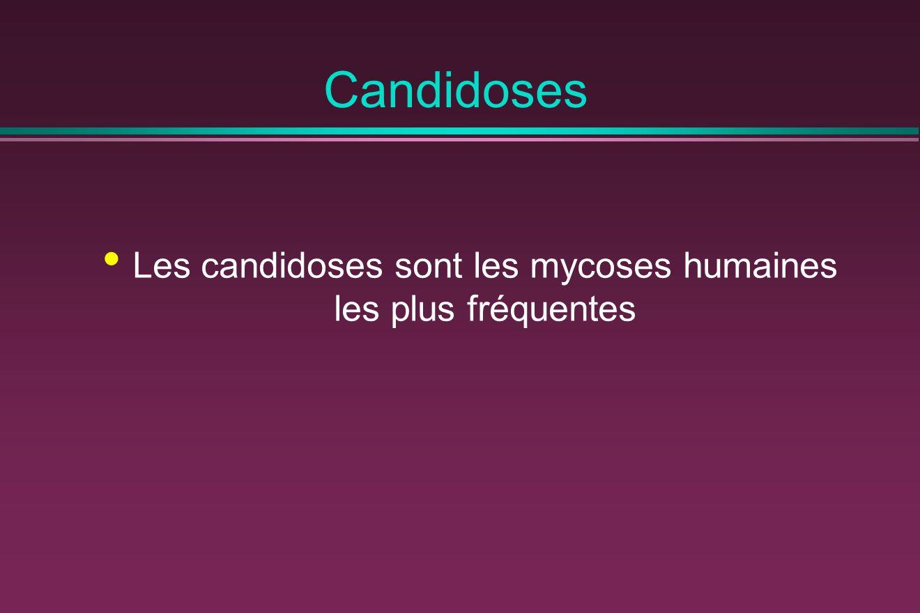 Les candidoses sont les mycoses humaines les plus fréquentes