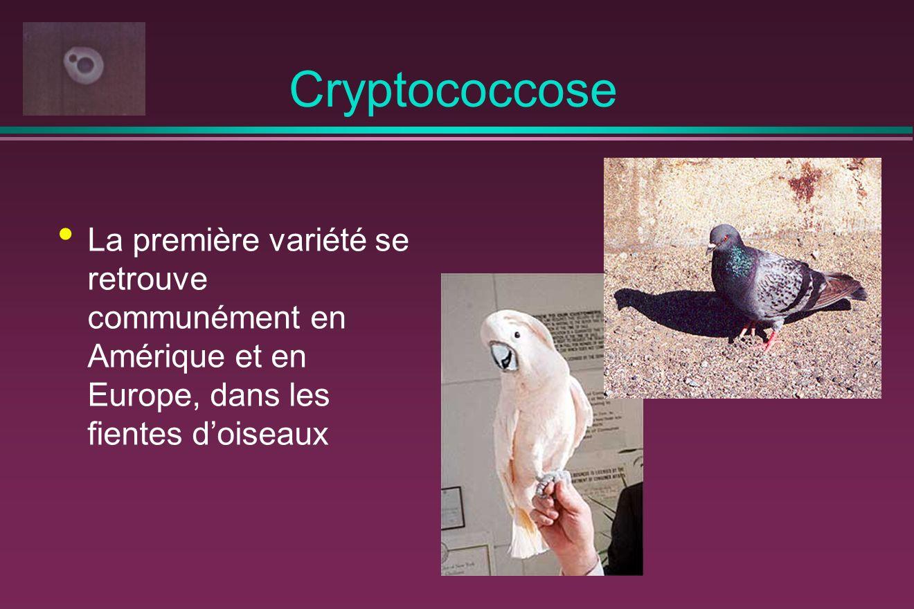 Cryptococcose La première variété se retrouve communément en Amérique et en Europe, dans les fientes d'oiseaux.