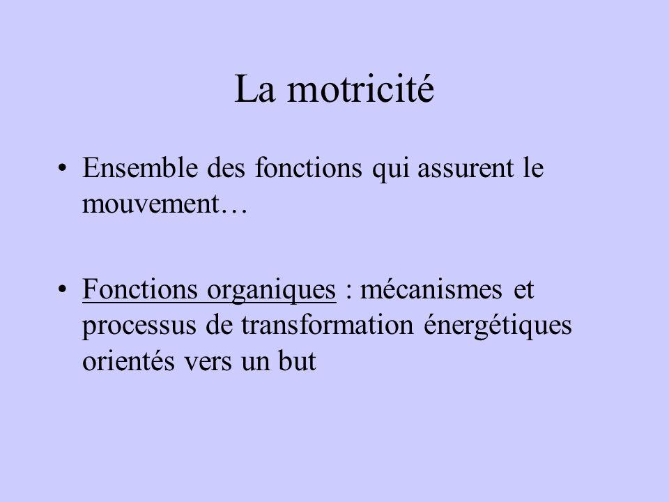 La motricité Ensemble des fonctions qui assurent le mouvement…