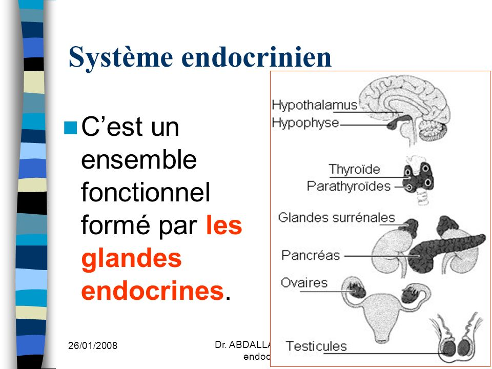 Dr. ABDALLAH - Système endocrinien I