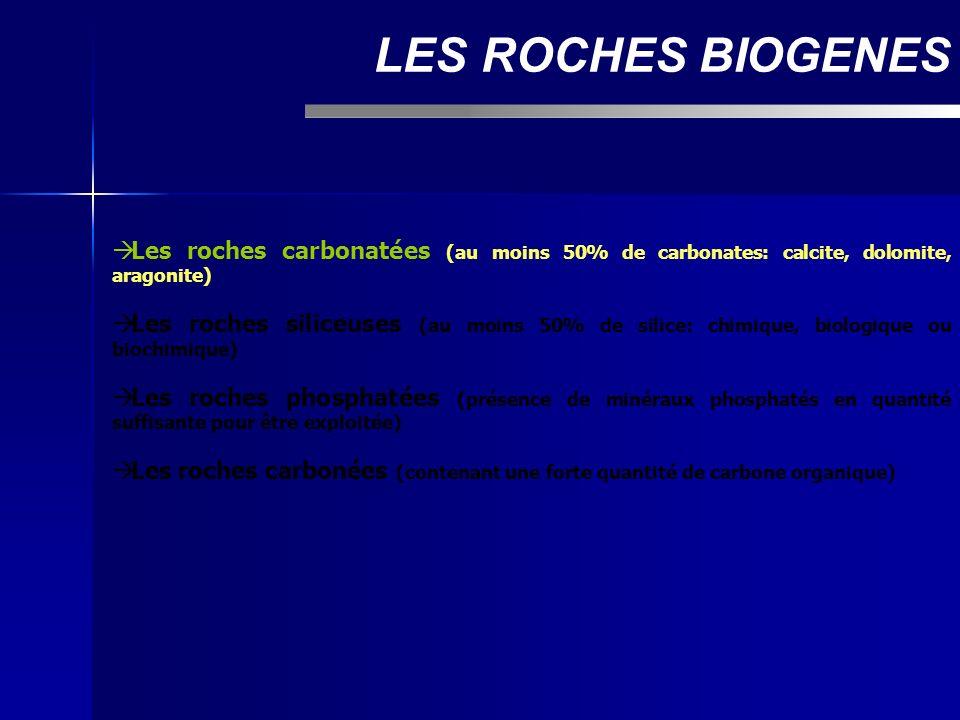 LES ROCHES BIOGENES Les roches carbonatées (au moins 50% de carbonates: calcite, dolomite, aragonite)