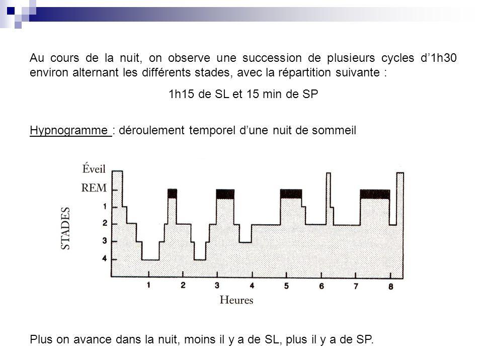 Au cours de la nuit, on observe une succession de plusieurs cycles d'1h30 environ alternant les différents stades, avec la répartition suivante :
