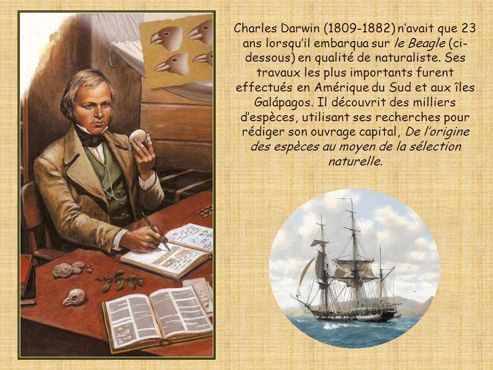 Charles Darwin (1809-1882) n'avait que 23 ans lorsqu'il embarqua sur le Beagle (ci-dessous) en qualité de naturaliste.
