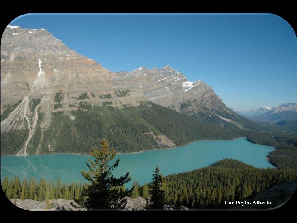 Lac Peyto, Alberta