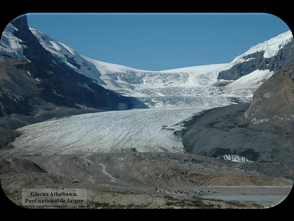 Glacier Athabasca, Parc national de Jasper