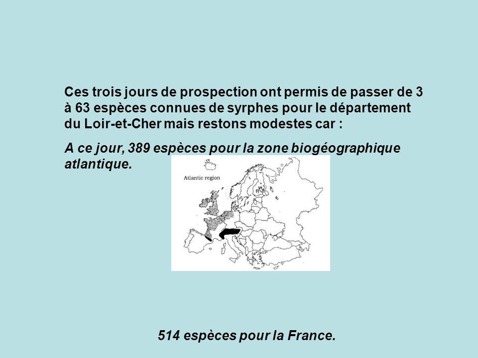 Ces trois jours de prospection ont permis de passer de 3 à 63 espèces connues de syrphes pour le département du Loir-et-Cher mais restons modestes car :
