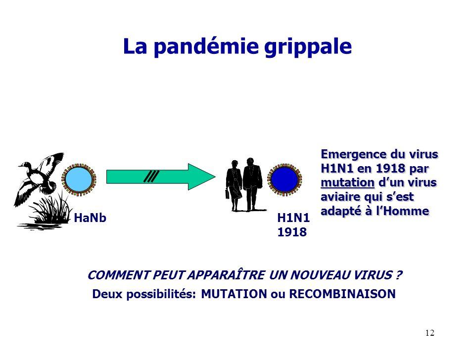 La pandémie grippale Emergence du virus H1N1 en 1918 par mutation d'un virus aviaire qui s'est adapté à l'Homme.