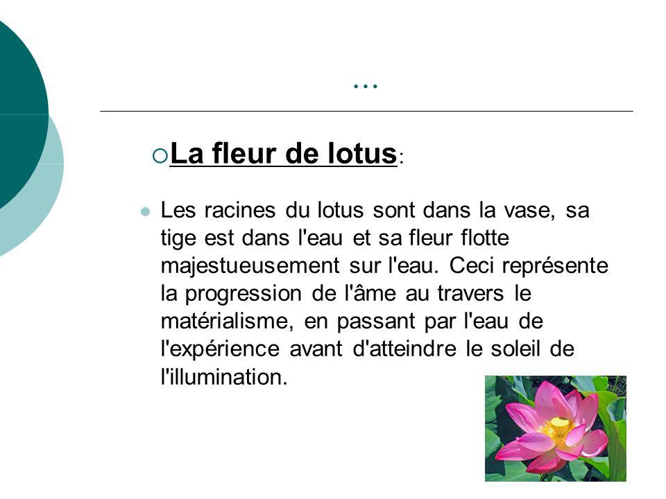 … La fleur de lotus: