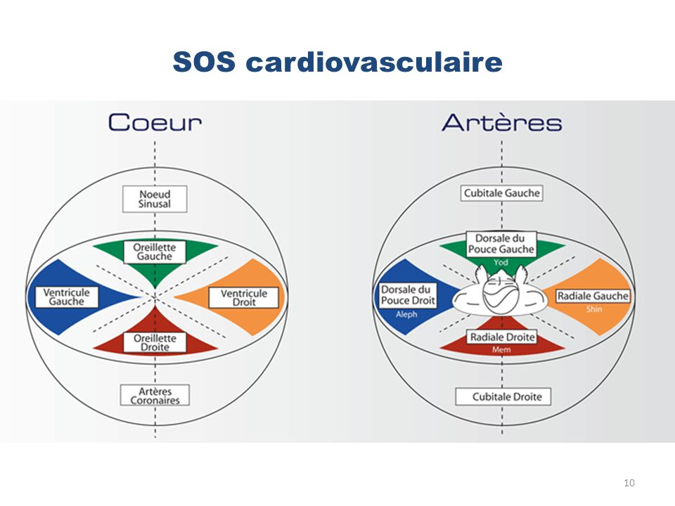 SOS cardiovasculaire