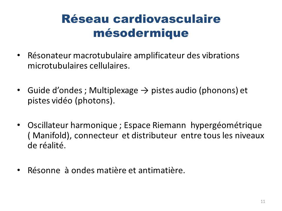 Réseau cardiovasculaire mésodermique
