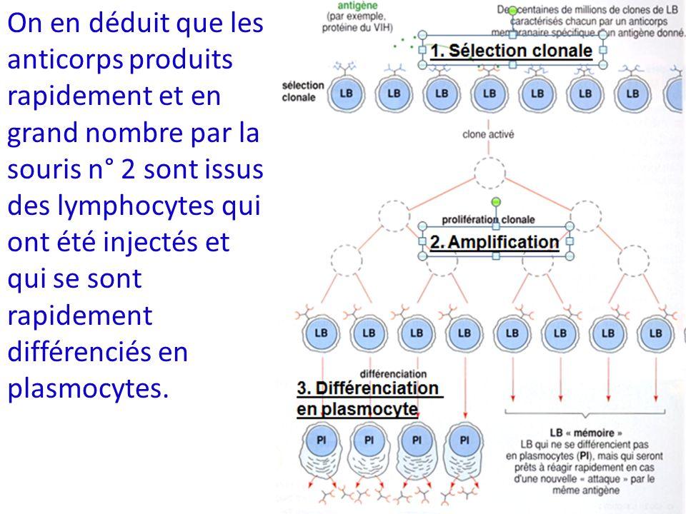 On en déduit que les anticorps produits rapidement et en grand nombre par la souris n° 2 sont issus des lymphocytes qui ont été injectés et qui se sont rapidement différenciés en plasmocytes.