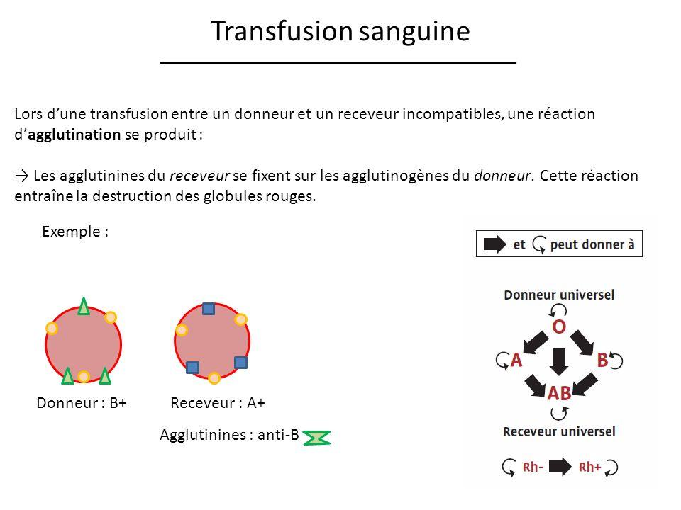 Transfusion sanguine Lors d'une transfusion entre un donneur et un receveur incompatibles, une réaction d'agglutination se produit :
