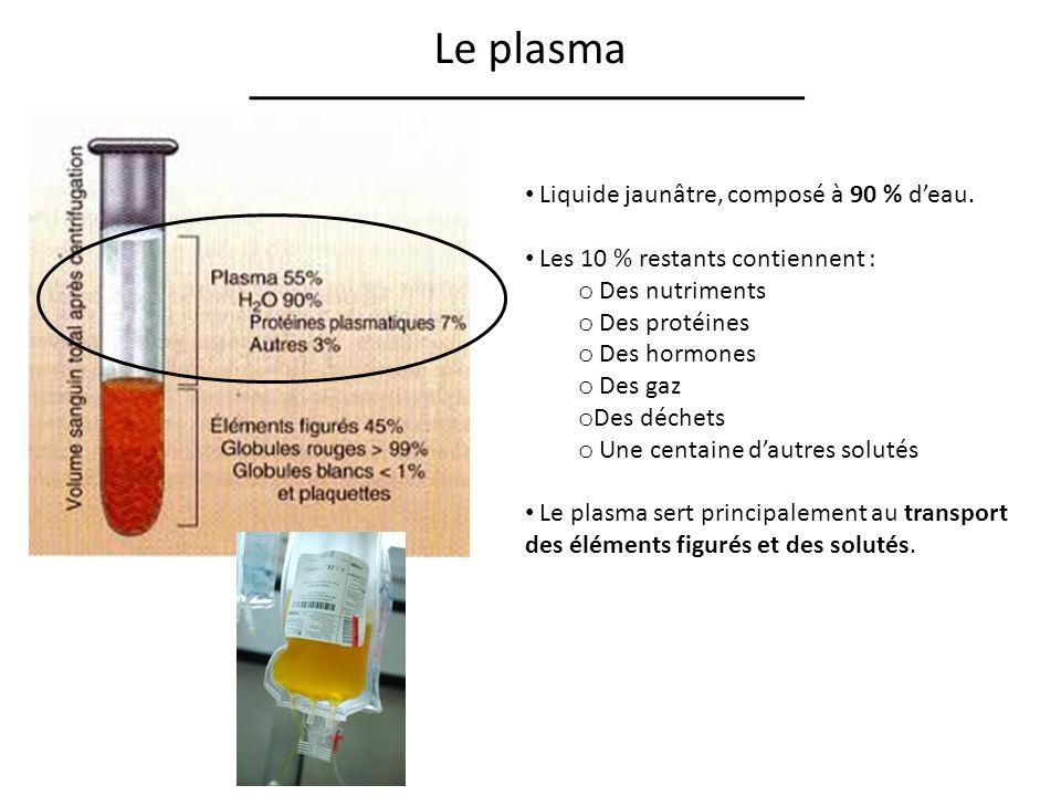Le plasma Liquide jaunâtre, composé à 90 % d'eau.