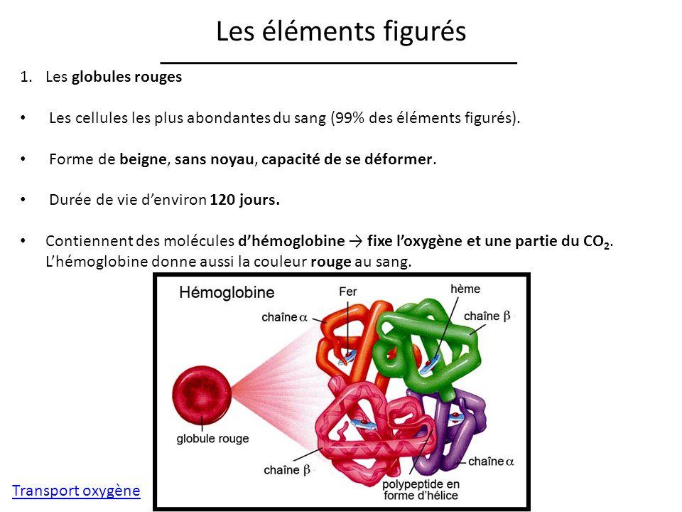 Les éléments figurés Les globules rouges